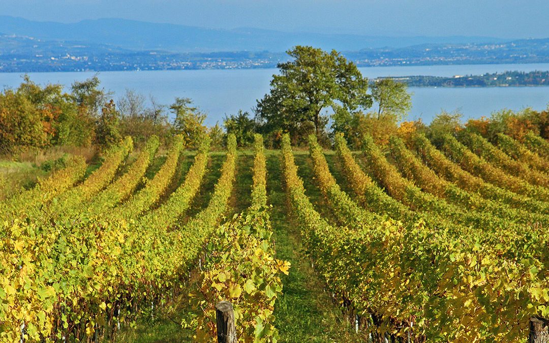 The discovery of Italian Wines: Lombardy