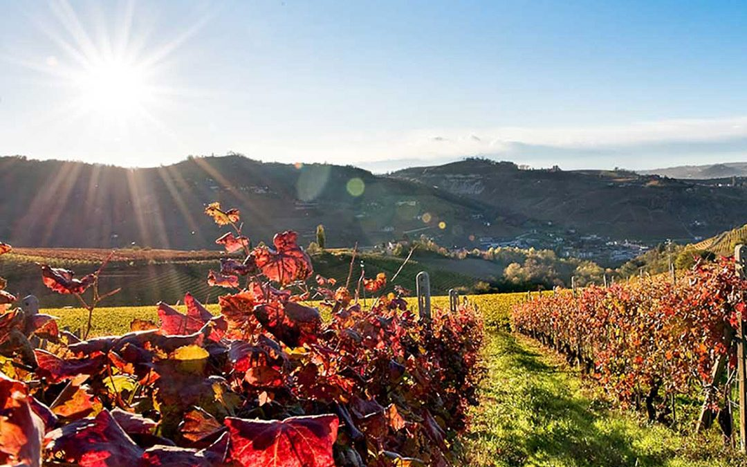 The discovery of Italian Wines: Piedmont